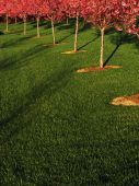 Spring Trees Row