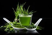 image of chlorella  - Young barley and chlorella spirulina - JPG
