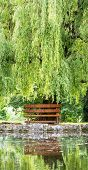 Wooden Bench And Weeping Willow Are Mirrored In The Lake