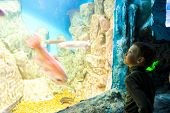 Boy In Front Of A Huge Aquarium In Oceanarium