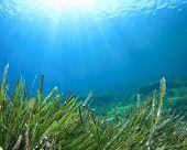 Seaweed sea grass