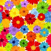 Seamless pattern with colorful gerbera flowers. Vector illustration.
