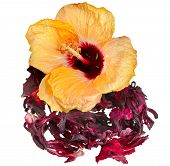 Hibiscus flower tea isolated on white background