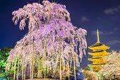Kyoto, Japan at Toji Pagoda in the spring season.