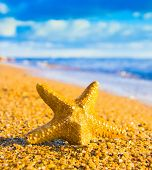 Starfish called Wanda Under the Sun