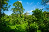 Lush green tropical forest