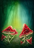 Enchanted dark forest with mushrooms