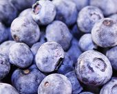 Blueberries (Macro)