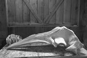 Whale Bones Ready To Be Shipped