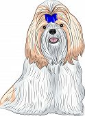 Vector Dog Breed Shih Tzu.