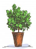 Sketch of small tree in clay pot, Hand drawn Vector illustration