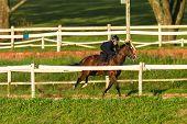 Race Horse Jockey Training Track