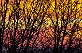 Natue backgrounds - tree branches at sunset