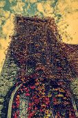 Vintage Look With Vegetation Fall On A Tower