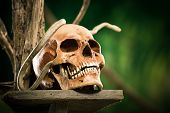 image of jungle snake  - Old ruined skull with snake and wild jungle in the background - JPG