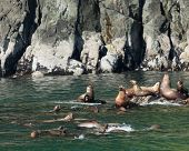 Sea Lions in Water