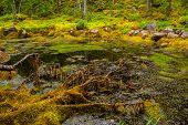 Mossy pond
