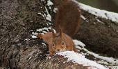 creeping squirrel