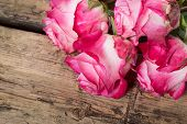 Pink Fresh Roses On Wood