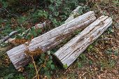 Felled Logs
