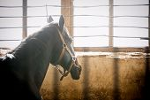 image of stable horse  - The horse in stable box thinking closeup - JPG