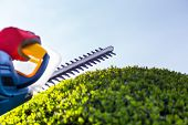 image of electric trimmer  - Cutting a hedge with electrical hedge trimmer - JPG