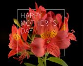 picture of bouquet  - Elegant Happy Mother day flower bouquet background ideal for greeting card and poster design - JPG