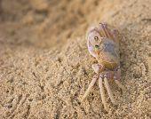 image of crustations  - crab close - JPG