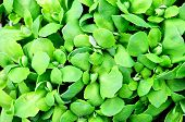 abstract background of green leaves plant