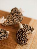 picture of morchella mushrooms  - Freshly picked flavorful morel mushrooms - JPG