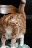 Grandma'S Fat Cat