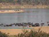 River Banks In India