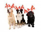 cães de Natal