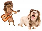 two rock star dogs with mullets