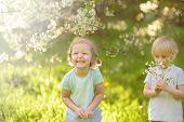Cute Little Children Playing Together In Blooming Cherry Garden. Preschooler Boy And Girl. Best Frie poster