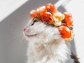 Beautiful Calico Cat With A Wreath On His Head. Cute Kitty In A Flowers Diadem On Her Head Sits In T poster