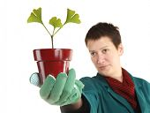 Gardener botanist is holding flowerpot with planted small Ginkgo tree
