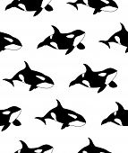 Vector Seamless Pattern Of Hand Drawn Killer Whale Swimming On White Background poster