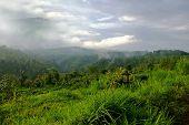 Green Hills Of Bali