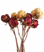 Withered rose bouquet