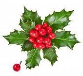 Weihnachten-Stechpalme Ilex isoliert auf weißem Hintergrund