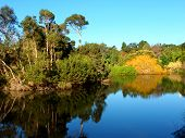 picture of royal botanic gardens  - Lake in the Royal Botanic Gardens of Melbourne Australia - JPG
