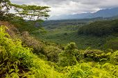 Lush, Pristine, Green, Tropical Forest In Mountainous Region Under Rain Clouds