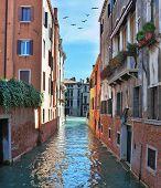 Eternal fabulous Venice. In the sky - a triangular flock of migratory birds