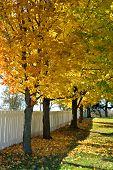 Missouri Maples