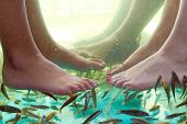 Fish spa pedicure of female feet