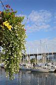 Granville Island Flower Basket, Vancouver