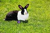Rabbit On Lawn.