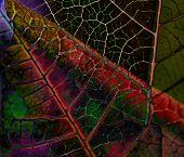 Abstract Vegetation Texture