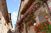 stock photo of geranium  - Blooming red and pink Geranium flowers on balconies and windows of old houses in a typical alley of the ancient town Frontone - JPG